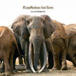 #LoopMonkeys feat. KIMM – Elephants [B.A.B.A. Records]