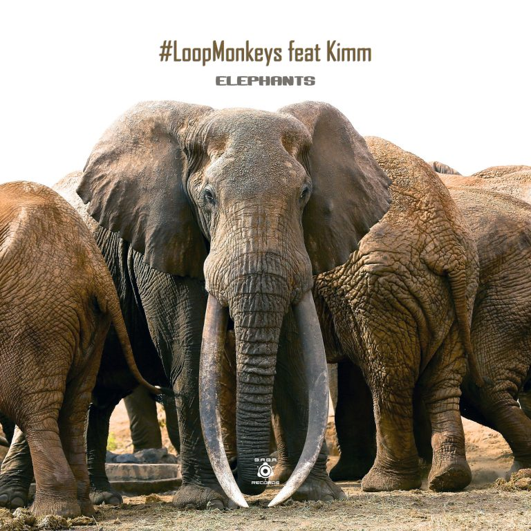 [OUT NOW] BABAREC219, #LoopMonkeys feat. KIMM – Elephants [B.A.B.A. Records]